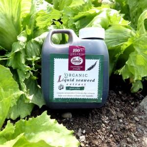 organic-liquid-seaweed-cumulus-organics